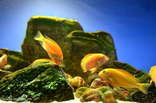 047_biotope-aquarium_a-14-2