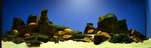 047_biotope-aquarium_a-14-3