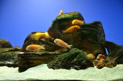 047_biotope-aquarium_a-14-4