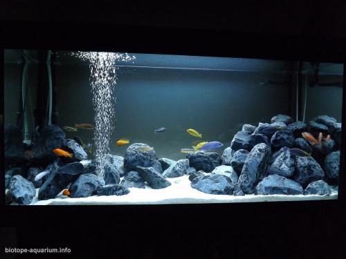 049_biotope-aquarium_a-1-2