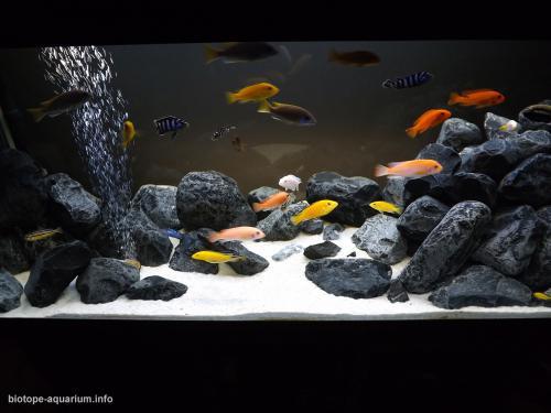 049_biotope-aquarium_a-1-3
