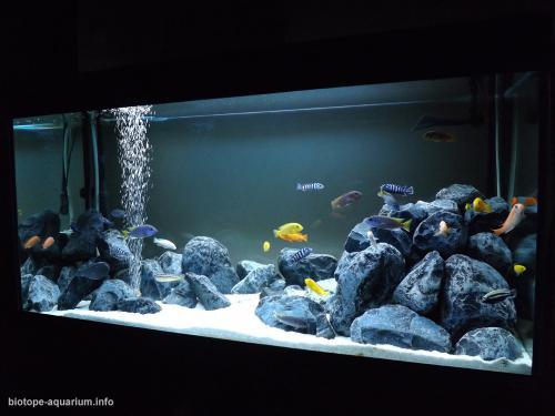 049_biotope-aquarium_a-1-4