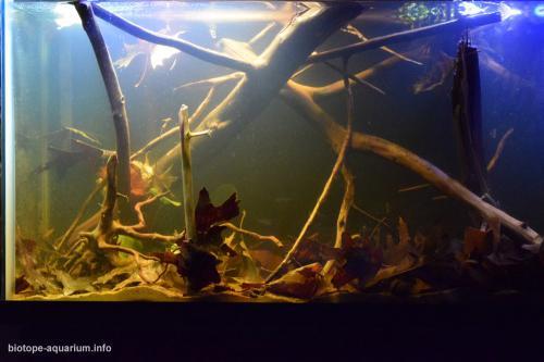 050_biotope-aquarium_sa-19-4