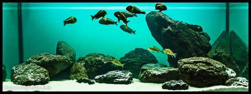 2015_biotope_aquarium_a_10_2
