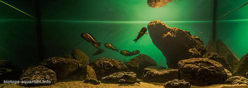 2015_biotope_aquarium_a_10_3