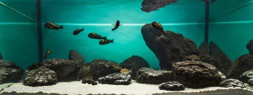 2015_biotope_aquarium_a_10_4