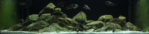 2015_biotope_aquarium_a_11_1