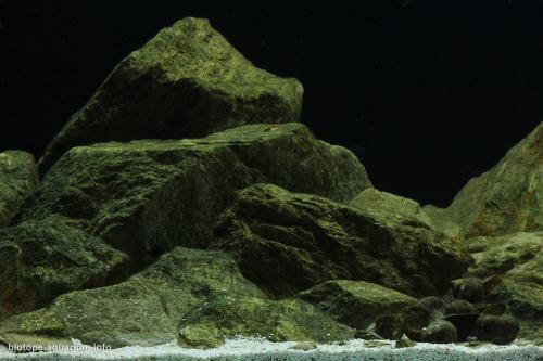 2015_biotope_aquarium_a_11_3
