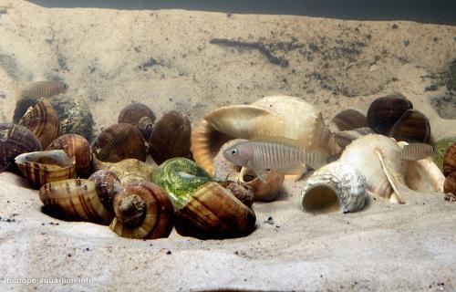 2015_biotope_aquarium_a_15_3