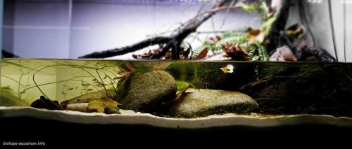 2015_biotope_aquarium_ao_2_1