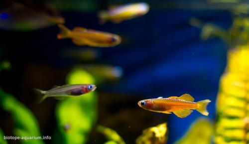 2015_biotope_aquarium_ao_3_3