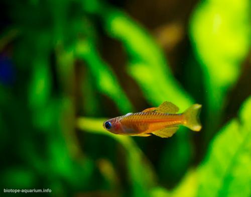 2015_biotope_aquarium_ao_3_4