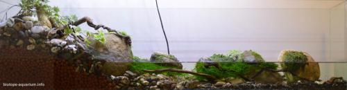 2015_biotope_aquarium_e_10_1