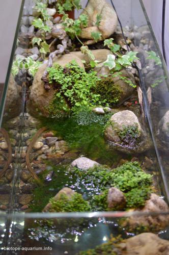 2015_biotope_aquarium_e_10_2