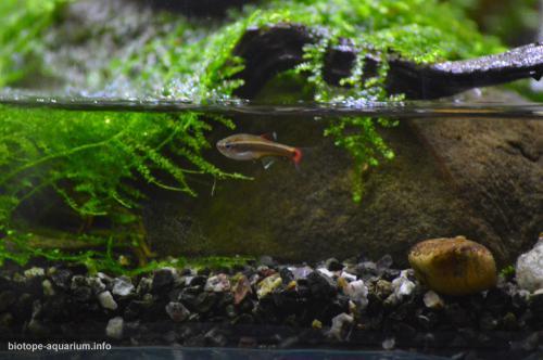 2015_biotope_aquarium_e_10_3