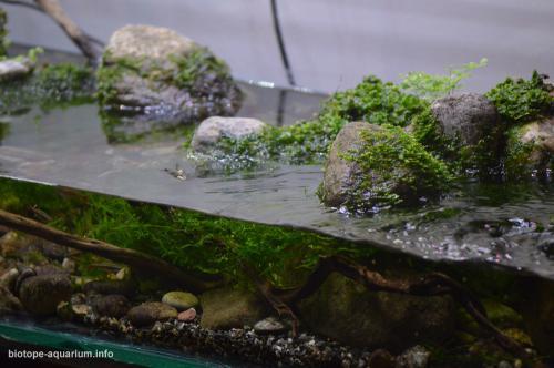 2015_biotope_aquarium_e_10_4