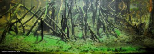 2015_biotope_aquarium_e_12_1