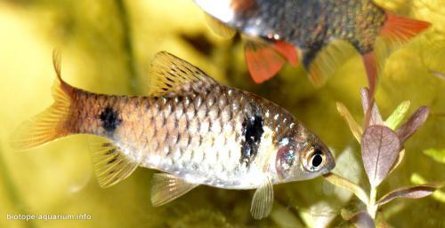 2015_biotope_aquarium_e_15_3