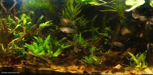 2015_biotope_aquarium_e_19_1