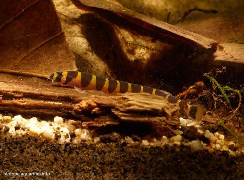 2015_biotope_aquarium_e_19_4