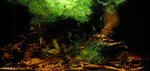 2015_biotope_aquarium_e_5_1