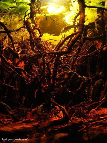 2015_biotope_aquarium_e_9_2