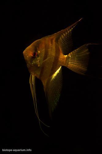 2015_biotope_aquarium_sa_11_4