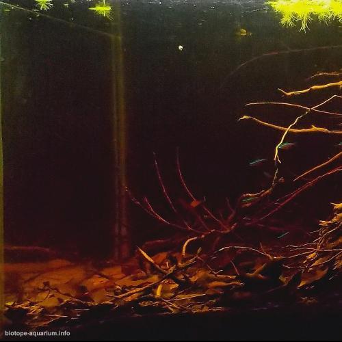 2015_biotope_aquarium_sa_13_2