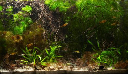 2015_biotope_aquarium_sa_17_1