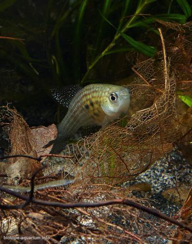 2015_biotope_aquarium_sa_17_3
