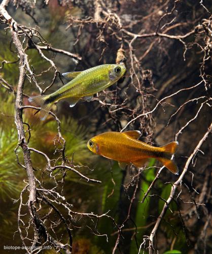 2015_biotope_aquarium_sa_17_4