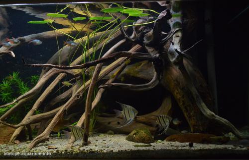 2015_biotope_aquarium_sa_1_3