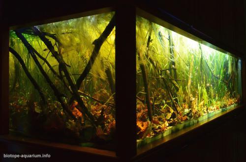2015_biotope_aquarium_sa_6_3