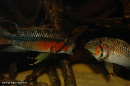 2015_biotope_aquarium_sa_8_3