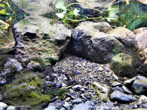 El_Coyote_River_ecologic_park_Charco_Azul_Nuevo_León_Mexico_3