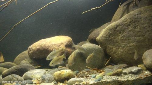 Endangered Ecosystem In Ciliwung's Shallow Water At Cibinong, Bogor – Indonesia (5)