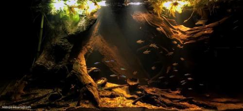 Floresta de igapó (1)