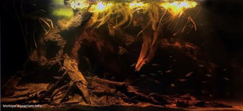 Floresta de igapó (3)