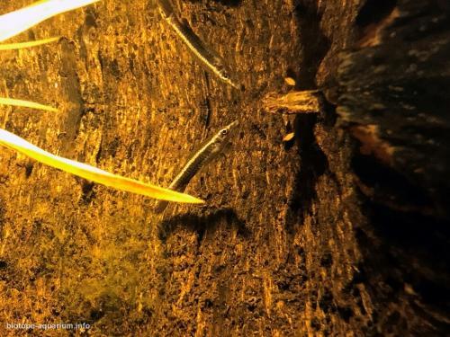 Floresta de igapó (5)