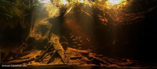 Floresta de igapó (6)