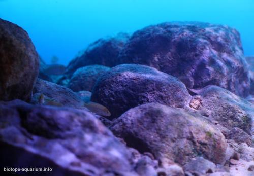 Likoma_Island's_rocky_habitat_Southeast_of_Lake_Malawi_Mozambique_waters_4