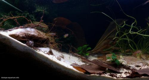 Little_creek_of_West_Africa_with_killifish_1