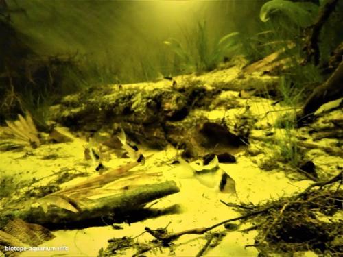 Rio Poranga, tropical stream in the region of São Gabriel da Cachoeira, Amazonas (2)