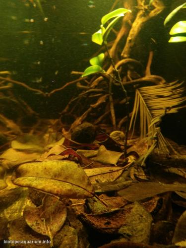 Shallow_blackwater_habitat_in_the_middle_Rio_Negro_6