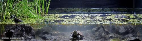 Swampy_channel_in_the_Yangtze_River_basin_southern_Hubei_province_Eastern_China_1