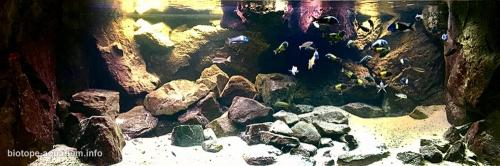 Where_the_sand_meets_the_rocks_in_lake_Tanganykia_5