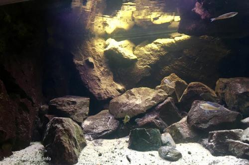 Where_the_sand_meets_the_rocks_in_lake_Tanganykia_6